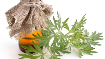 Настойка из полыни: применение, рецепт приготовления