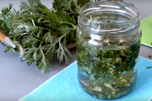 Настойка из полыни - рецепт и заготовка