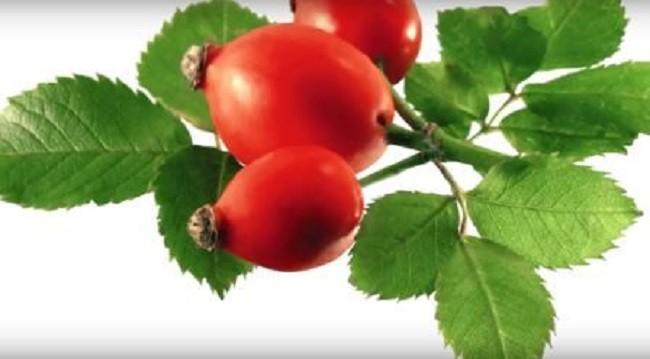свежие ягоды для настойки