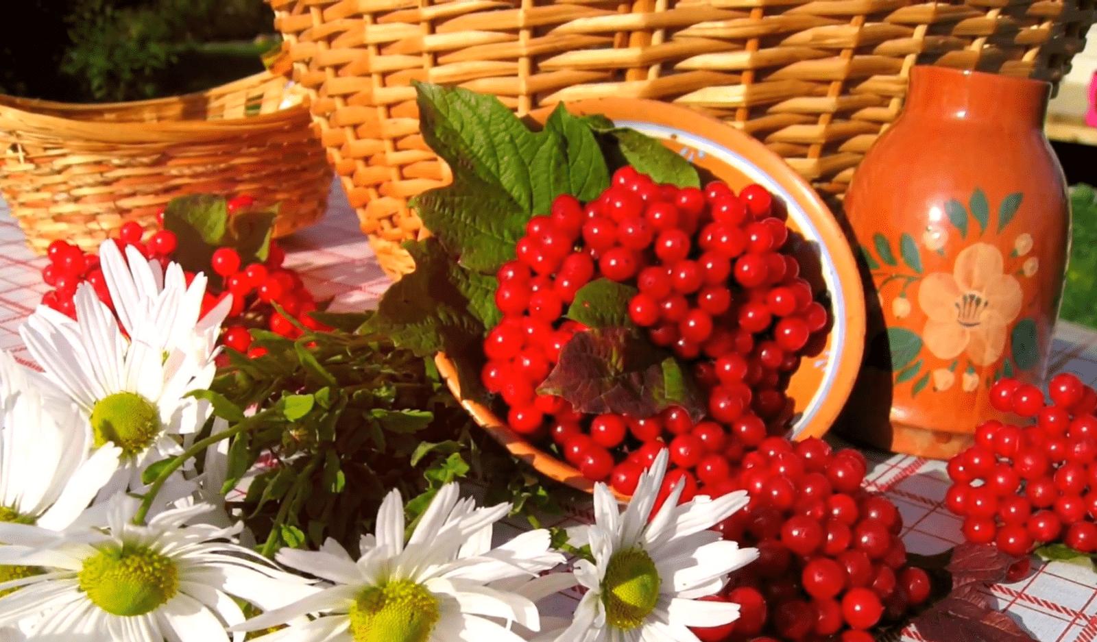 ягоды калины