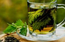 Крапивный чай: польза для организма, как заварить