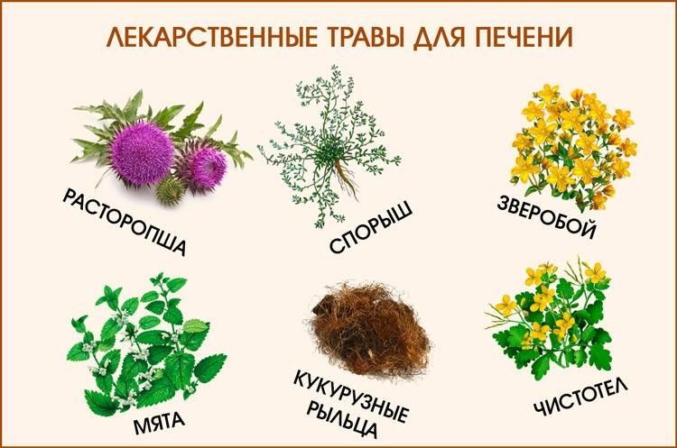 какая трава для лечения печени