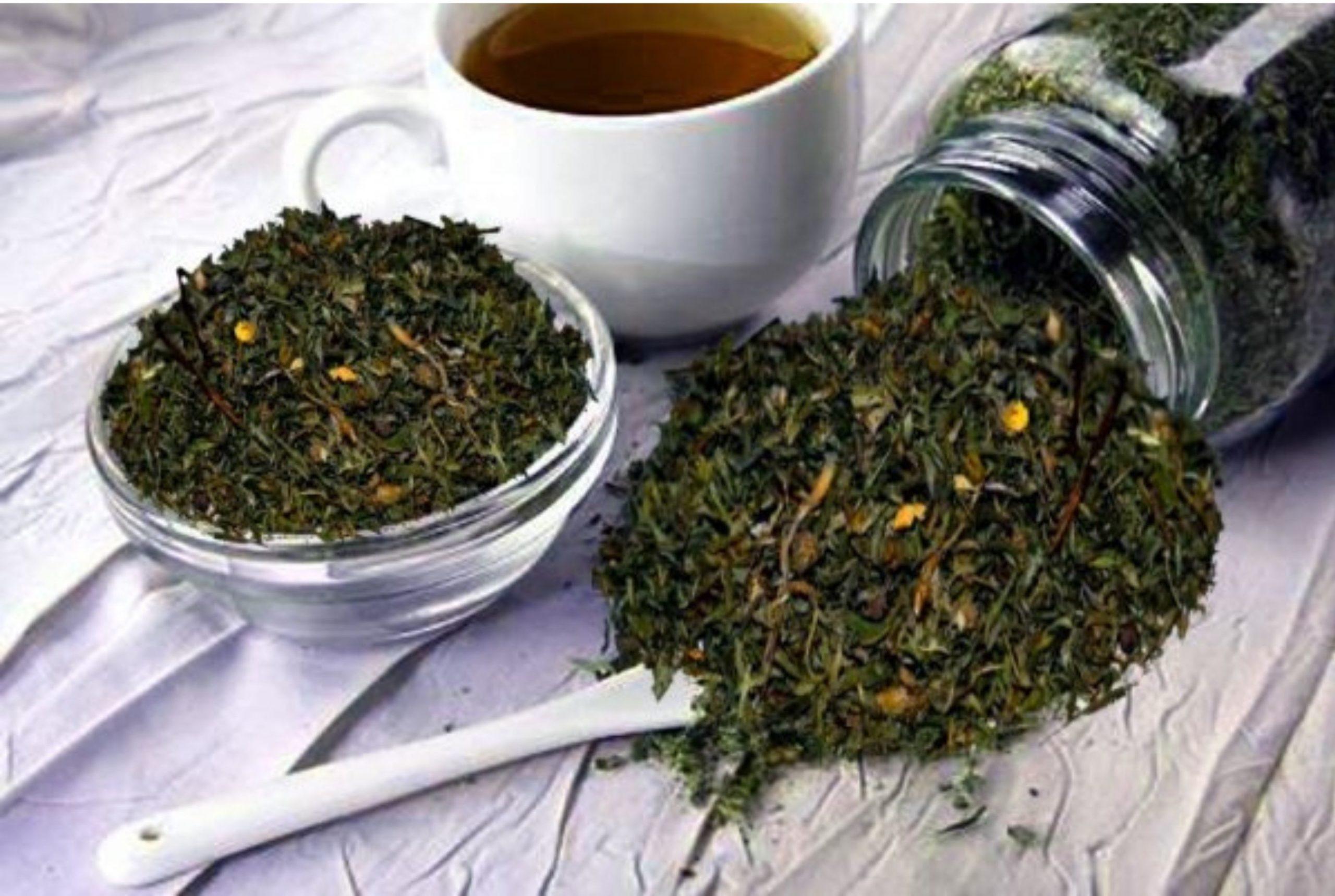 Курильский чай лечебные свойства и противопоказания, инструкция по завариванию
