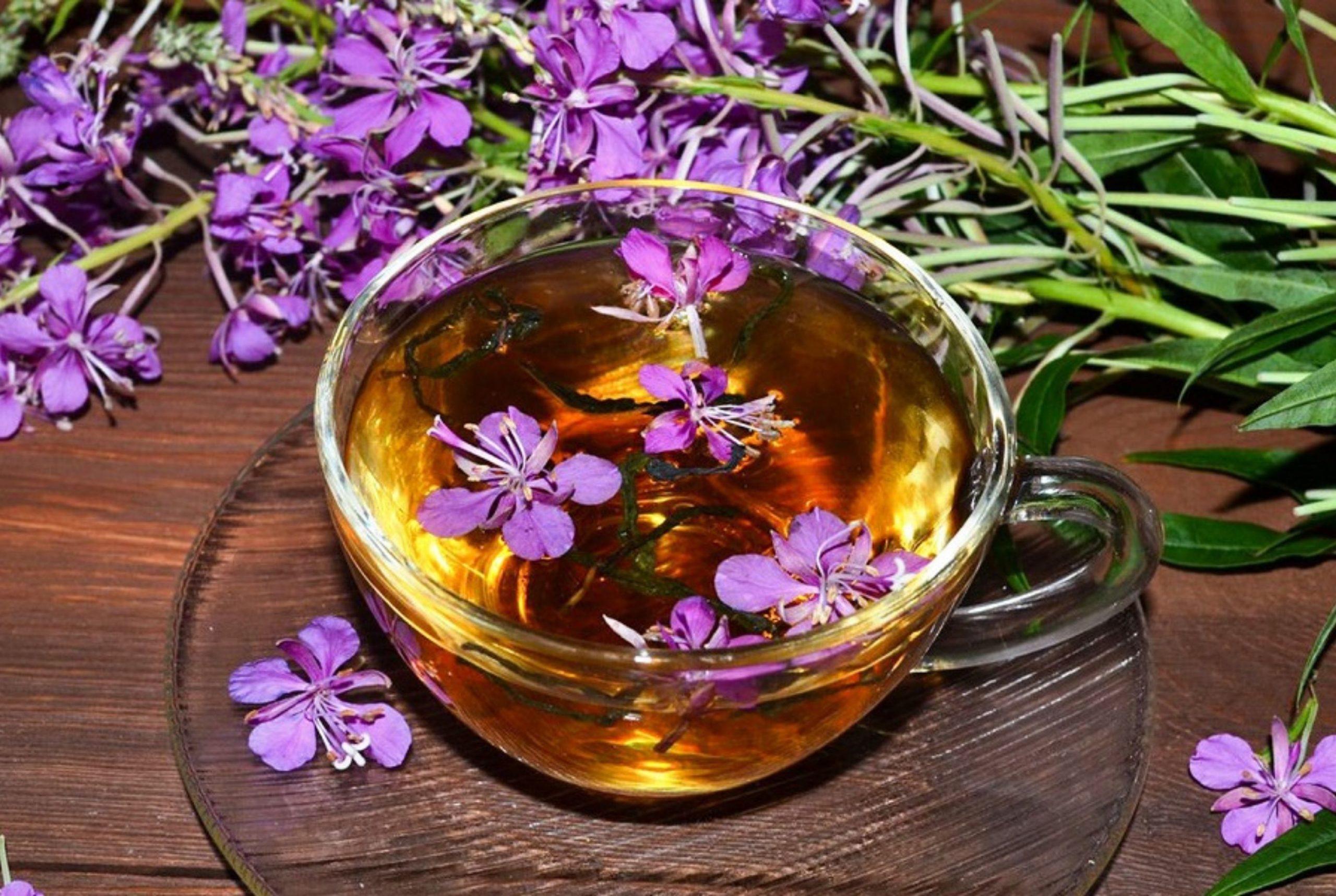 Как пить иван чай правильно. Советы специалистов