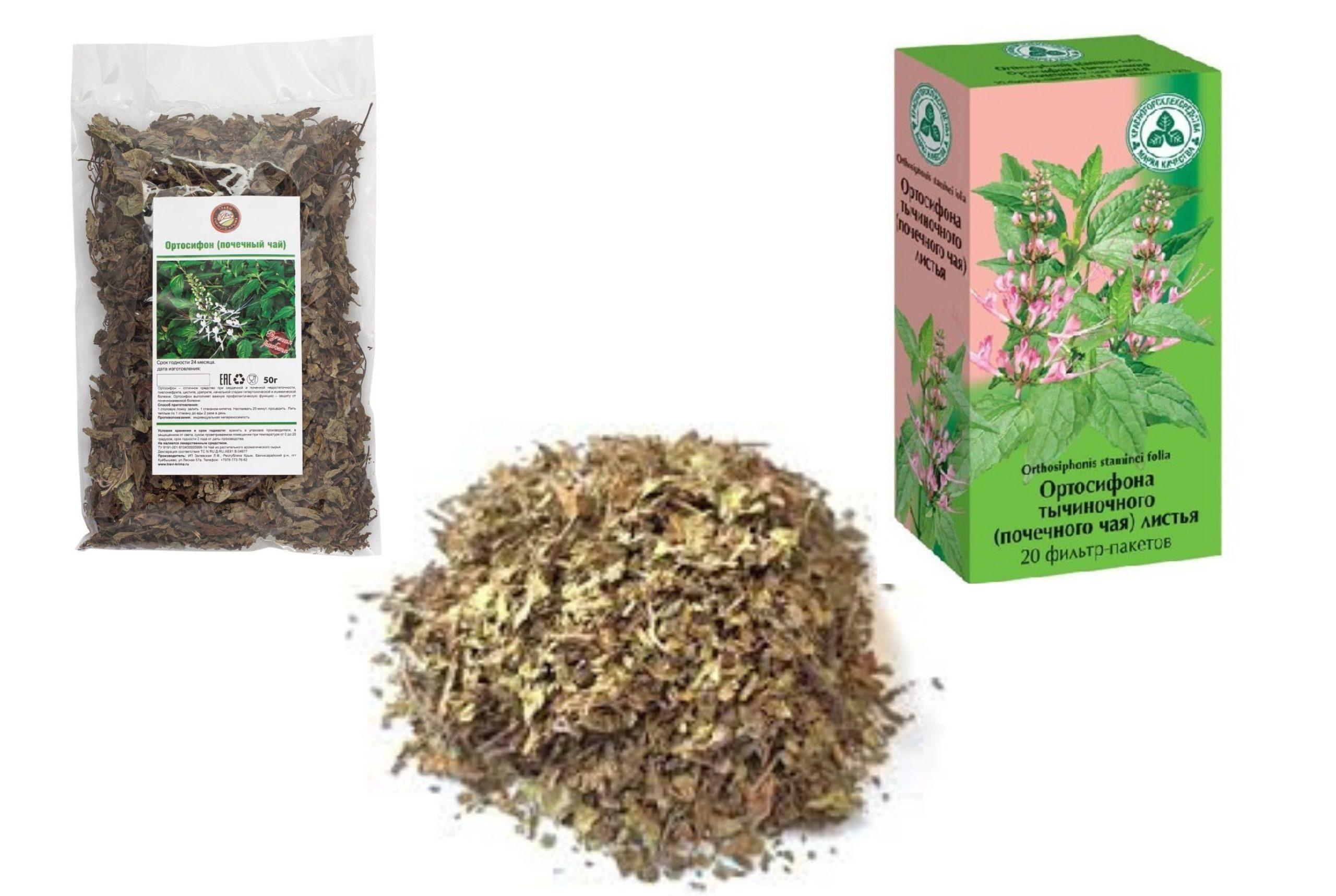 Почечный чай ортосифон полезные свойства и противопоказания